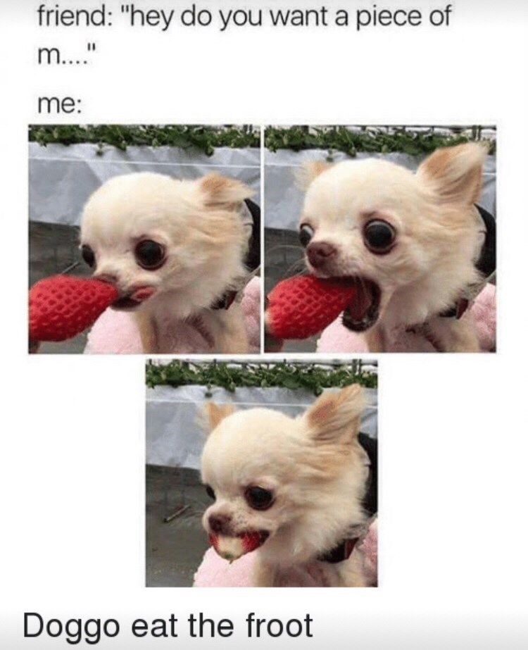 """Dog - friend: """"hey do you want a piece of m..."""" me: Doggo eat the froot"""