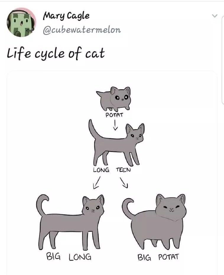 Canidae - Mary Cagle @cubewatermelon Life cycle of cat POTAT LONG TEEN BIG LONG BIG POTAT