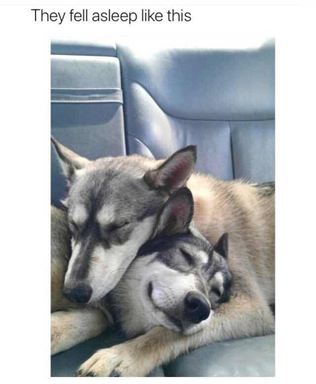 Mammal - They fell asleep like this
