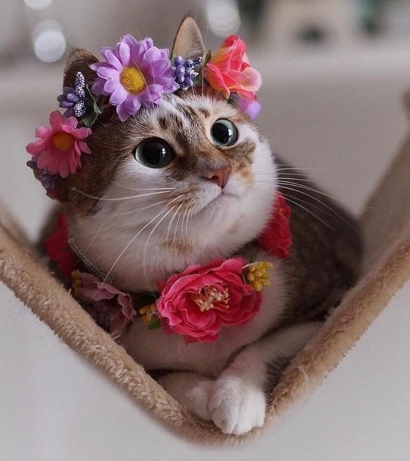 Cat - mister.metzi