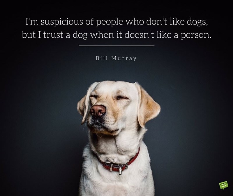 Dog - I'm suspicious of people who don't like dogs, but I trust a dog when it doesn't like a person. Bill Murray