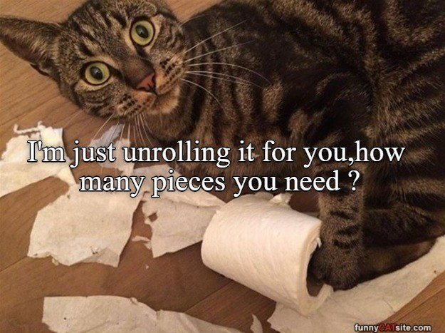 Cat - I'm just unrolling it for you,how many pieces you need ? funnyCATsite.com