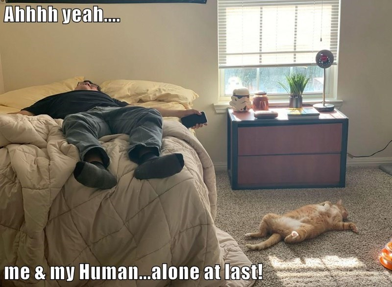 Room - Ahhhh yeah. me & my Human...alone at last!