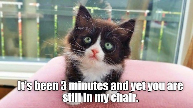 Cat - It's been 3 minutes and yet you are still in my chair.