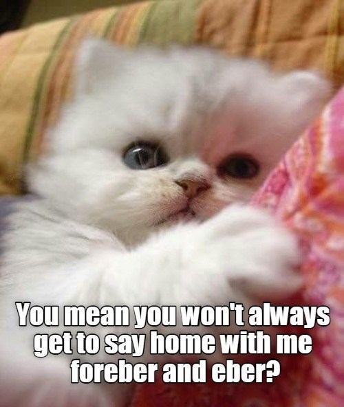Cat - You mean you won't always get to say home with me foreber and eber?