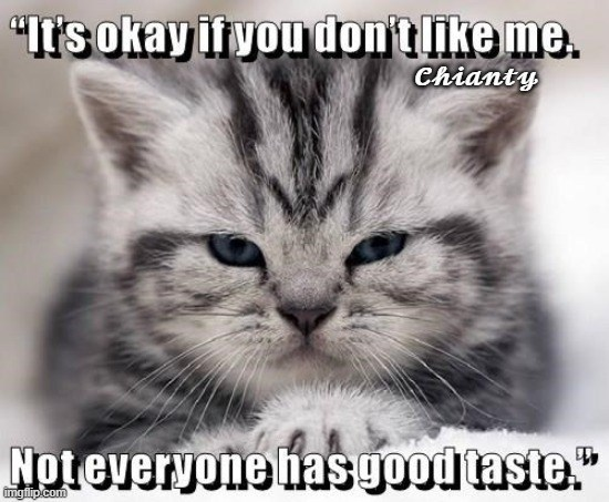 "Cat - ""Its okay ityou don'tlike me. Chianty Noteveryone hasgood taste."" imgfip.com"