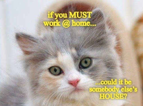 Cat - if you MUST work @ home.. ..could it be somebody else's HOUSE?