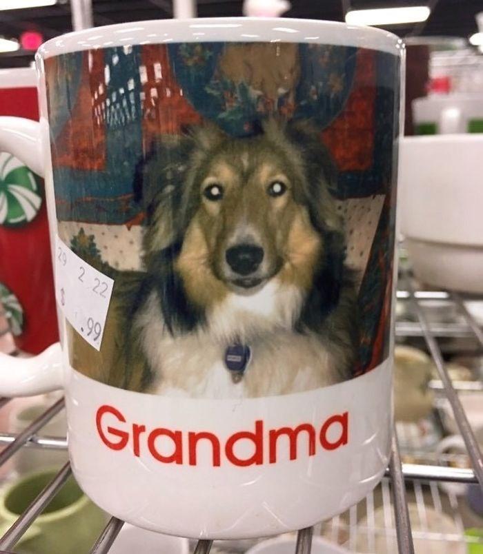 Dog - 29 2 22 99 Grandma
