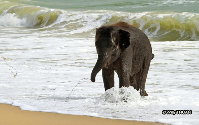 Elephant - ©WilyTHUAN