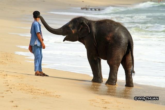 Elephant - ©WillyTHUAN