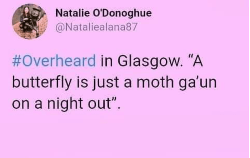 """Text - Natalie O'Donoghue @Nataliealana87 #Overheard in Glasgow. """"A butterfly is just a moth ga'un on a night out""""."""