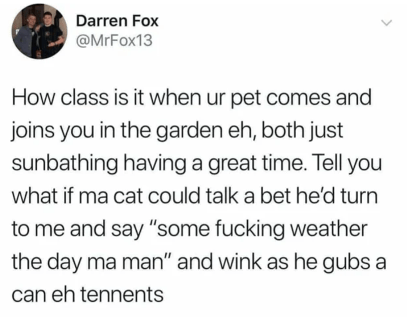 """Text - Darren Fox @MrFox13 How class is it when ur pet comes and joins you in the garden eh, both just sunbathing having a great time. Tell you what if ma cat could talk a bet he'd turn to me and say """"some fucking weather the day ma man"""" and wink as he gubs a can eh tennents"""