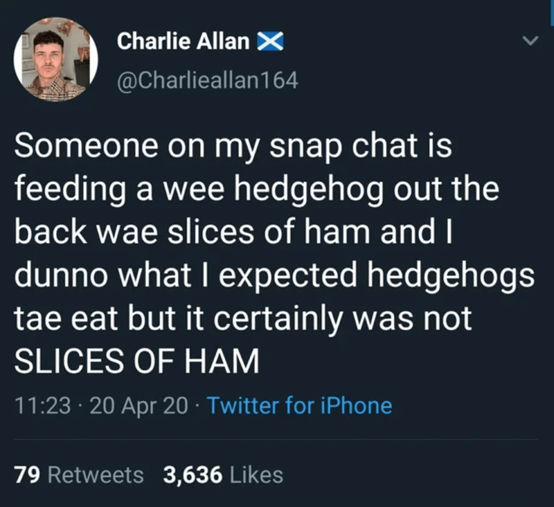 Text - Charlie Allan × @Charlieallan164 Someone on my snap chat is feeding a wee hedgehog out the back wae slices of ham and I dunno what I expected hedgehogs tae eat but it certainly was not SLICES OF HAM 11:23 · 20 Apr 20 · Twitter for iPhone 79 Retweets 3,636 Likes