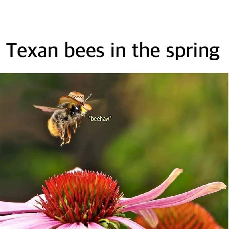 "Honeybee - Texan bees in the spring ""beehaw"