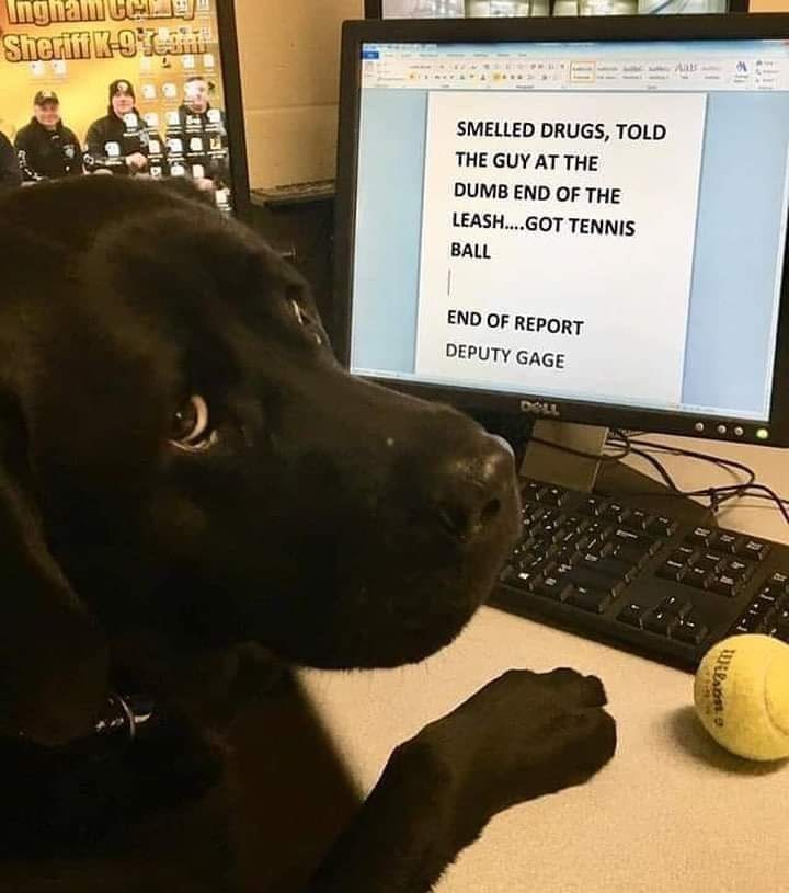 Canidae - Ingham Ca Sherifi K-O SMELLED DRUGS, TOLD THE GUY AT THE DUMB END OF THE LEASH..GOT TENNIS BALL END OF REPORT DEPUTY GAGE DOLL