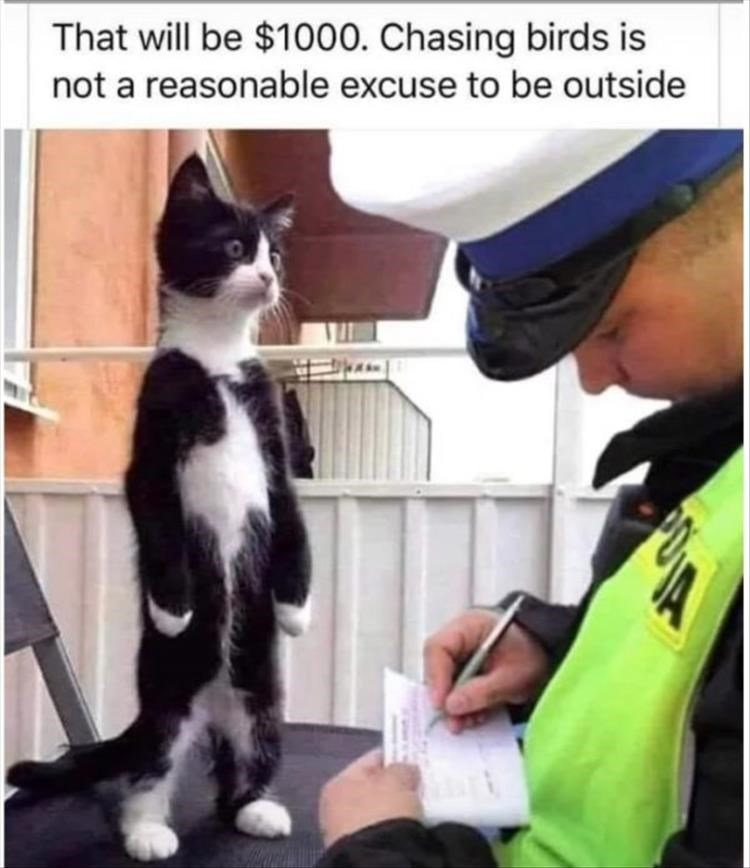 black and white cat standing upright on its hind legs while a police officer writes a ticket That will be $1000. Chasing birds is not a reasonable excuse to be outside