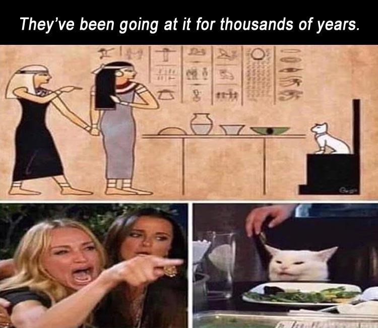 They've been going at it for thousands of years. woman yelling at a cat drawn in an ancient Egyptian hieroglyphs style