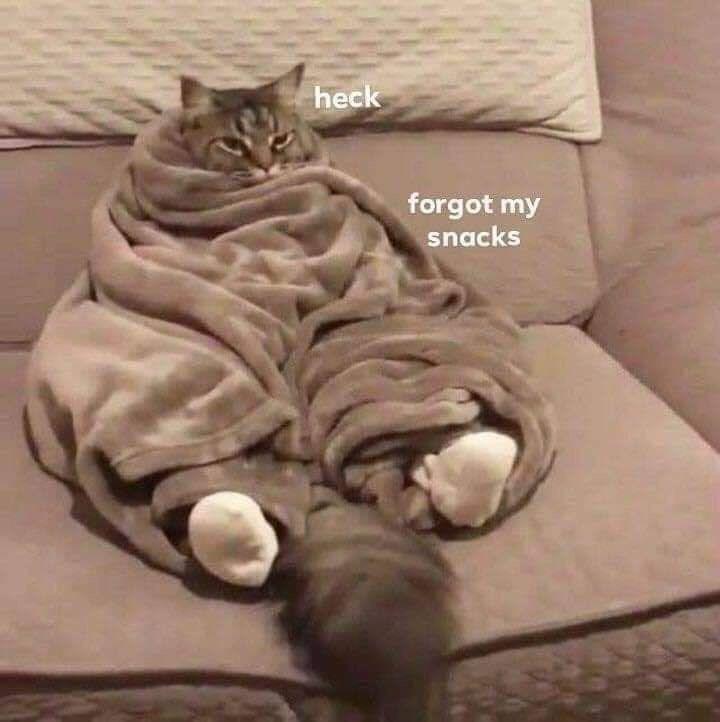 Cat - heck forgot my snacks