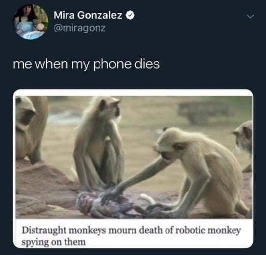 Adaptation - Mira Gonzalez O @miragonz me when my phone dies Distraught monkeys mourn death of robotic monkey spying on them