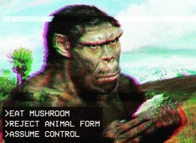 Human - >EAT MUSHROOM >REJECT ANIMAL FORM >ASSUME CONTROL