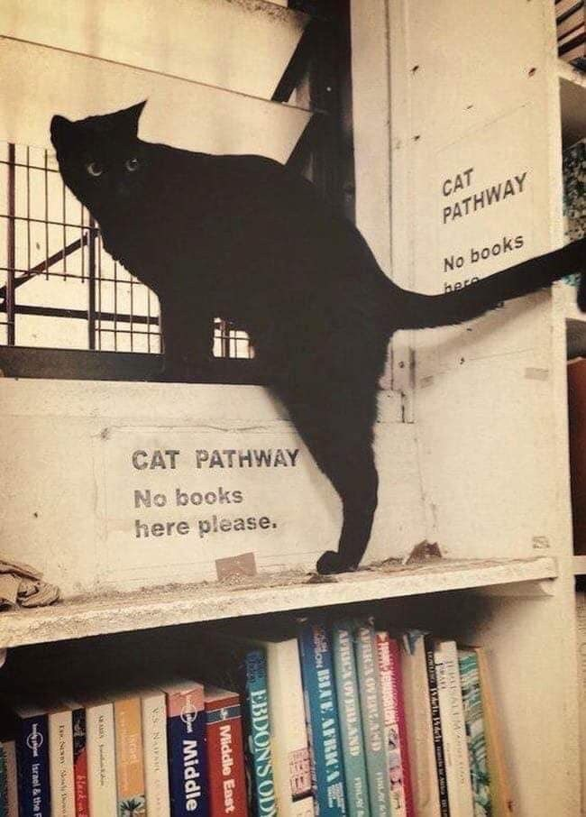 Cat - CAT PATHWAY No books here CAT PATHWAY No books here please. AFRICA OVEREAND APRICA OVERLAND FINLAY on BBAE AFRKCA BEEBDON'SODY Middie East Middle iscoel bluck tarnel & the F