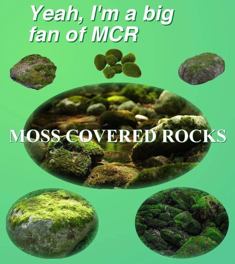 Rock - Yeah, I'm a big fan of MCR MOSS COVERED ROCKS