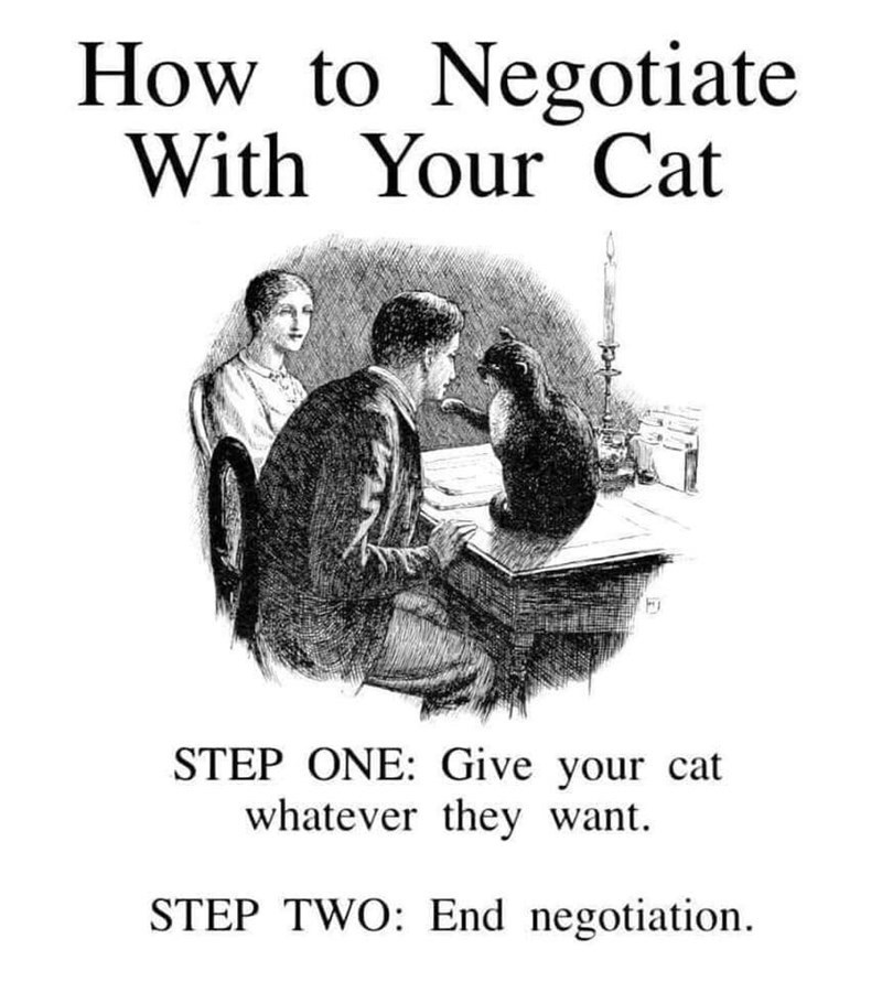Text - How to Negotiate With Your Cat STEP ONE: Give your cat whatever they want. STEP TWO: End negotiation.