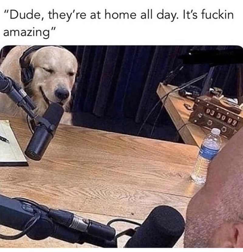 """Canidae - """"Dude, they're at home all day. It's fuckin amazing"""" 03 S0 09"""