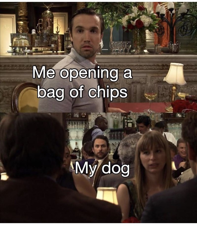 Cool - Me opening a bag of chips My dog