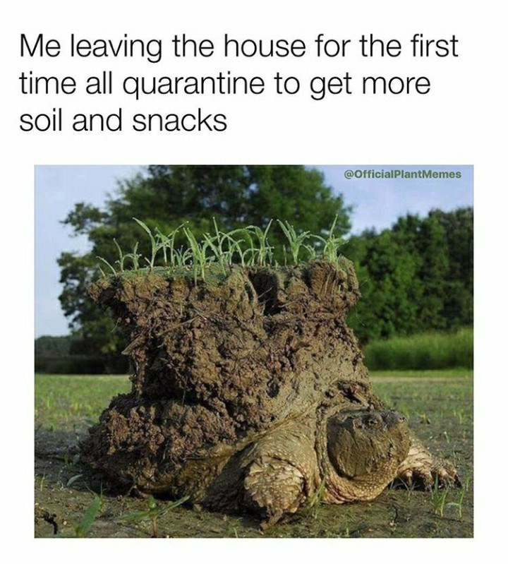 Tree - Me leaving the house for the first time all quarantine to get more soil and snacks @OfficialPlantMemes