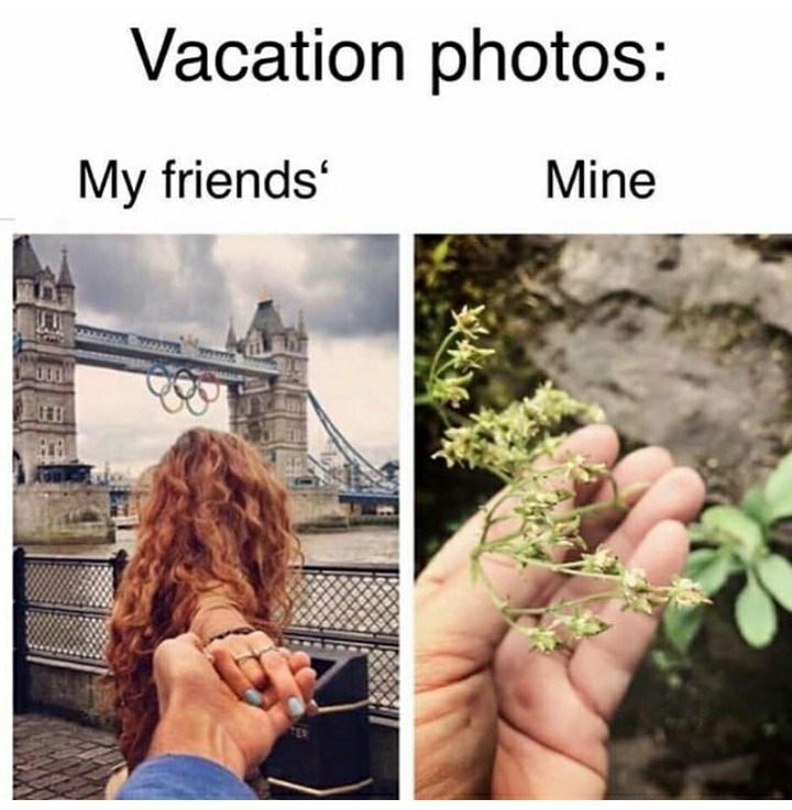 Organism - Vacation photos: My friends' Mine