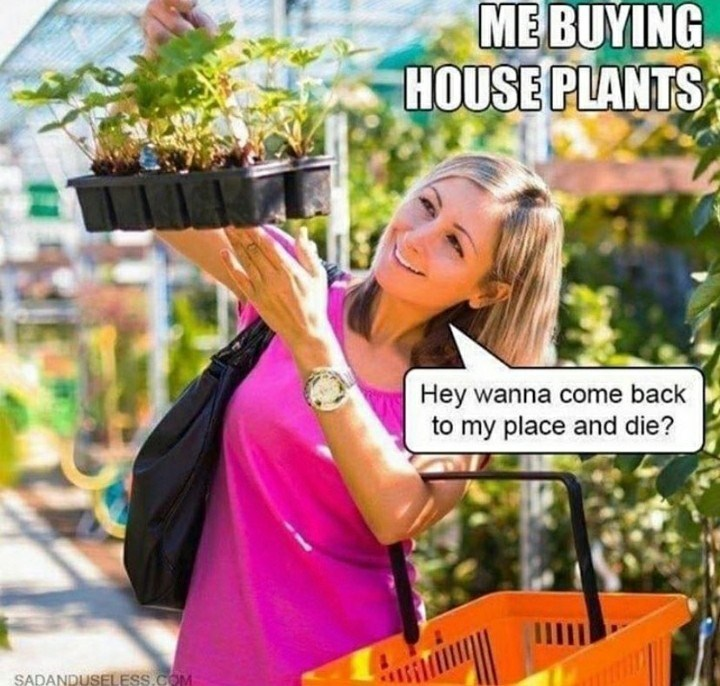 Product - ME BUYING HOUSE PLANTS Hey wanna come back to my place and die? SADANDUSELESS.COM