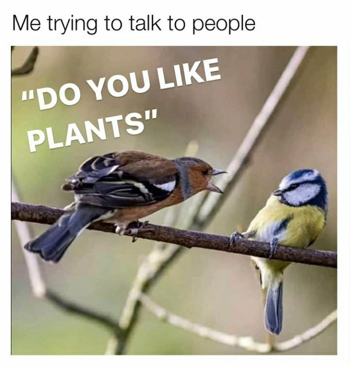 """Bird - Me trying to talk to people """"DO YOU LIKE PLANTS"""""""