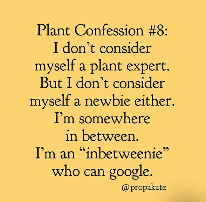 """Text - Plant Confession #8: I don't consider myself a plant expert. But I don't consider myself a newbie either. I'm somewhere in between. I'm an """"inbetweenie"""" who can google. @propakate"""
