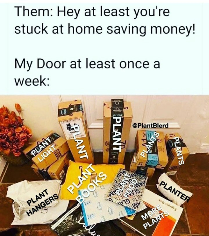 Snack - Them: Hey at least you're stuck at home saving money! My Door at least once a week: PLANT LIGHT prime Una @PlantBlerd PLANT GLA HANGERS PLANTER GLANETICO NETIC GLA MORE PLANTS Express Box PLANTS PLANT PLANTS PLANT prin prime prime prin PLANT BOOKS