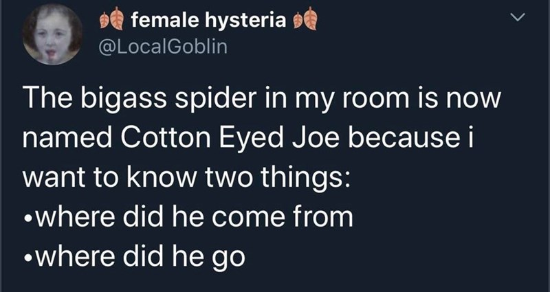 Text - e female hysteria @LocalGoblin The bigass spider in my room is now named Cotton Eyed Joe because i want to know two things: •where did he come from •where did he go