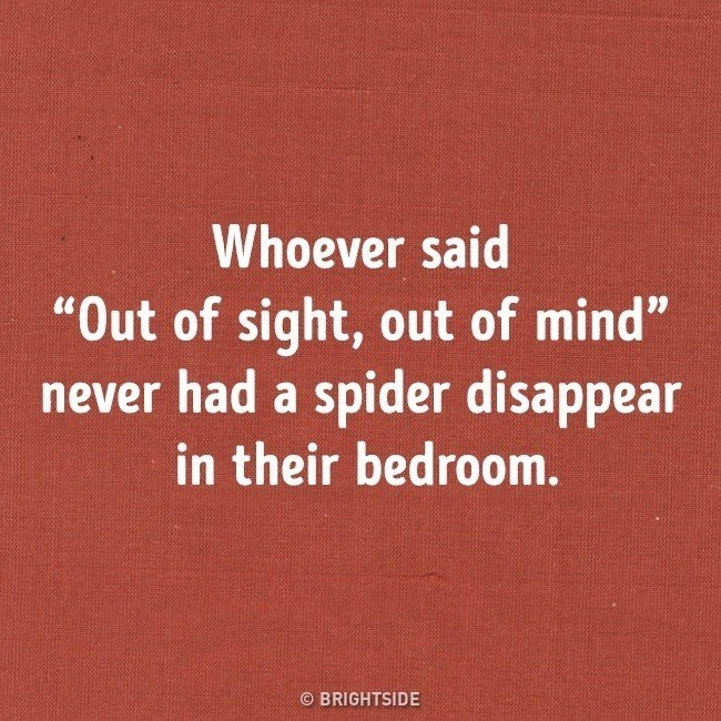 """Text - Whoever said """"Out of sight, out of mind"""" never had a spider disappear in their bedroom. © BRIGHTSIDE"""