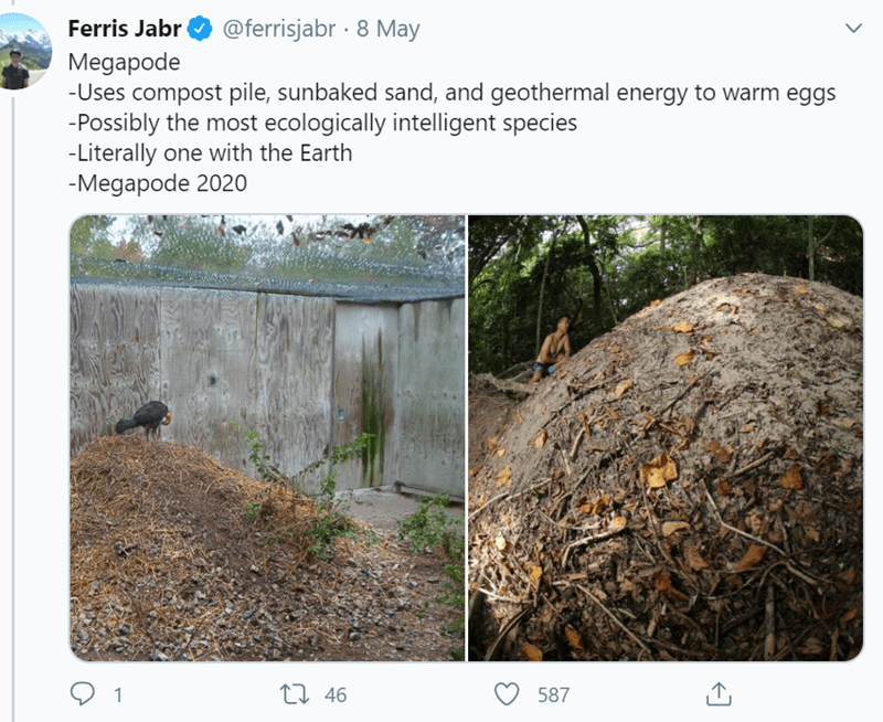 Soil - Ferris Jabr @ferrisjabr · 8 May Megapode -Uses compost pile, sunbaked sand, and geothermal energy to warm eggs -Possibly the most ecologically intelligent species -Literally one with the Earth -Megapode 2020 27 46 587