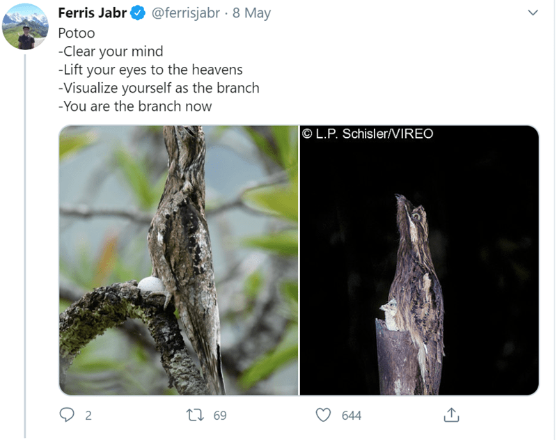 Adaptation - Ferris Jabr @ferrisjabr · 8 May Potoo -Clear your mind -Lift your eyes to the heavens -Visualize yourself as the branch -You are the branch now O L.P. Schisler/VIREO 644 69 L7 2.