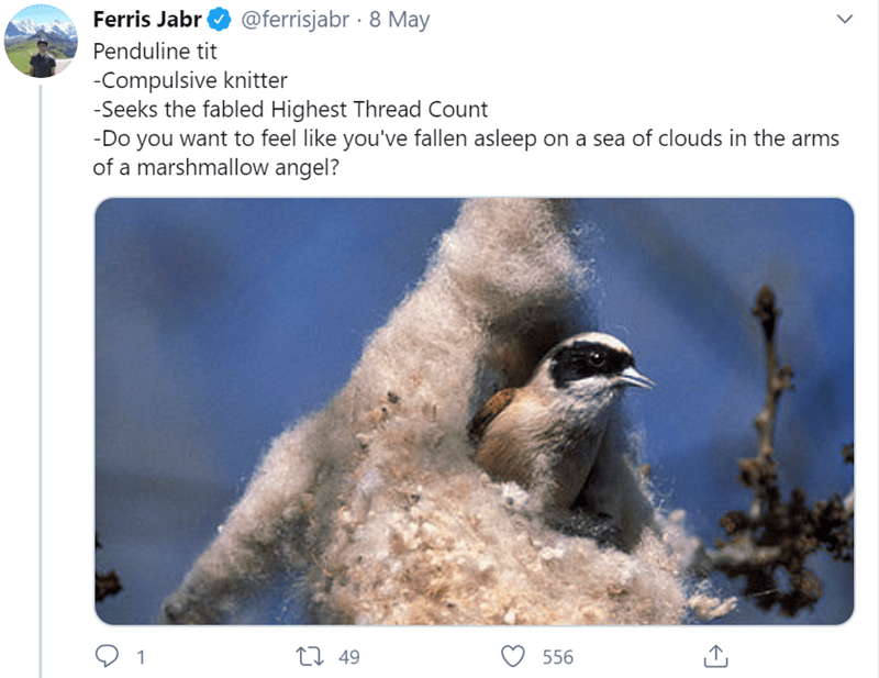 Bird - Ferris Jabr @ferrisjabr · 8 May Penduline tit -Compulsive knitter -Seeks the fabled Highest Thread Count -Do you want to feel like you've fallen asleep on a sea of clouds in the arms of a marshmallow angel? 27 49 556
