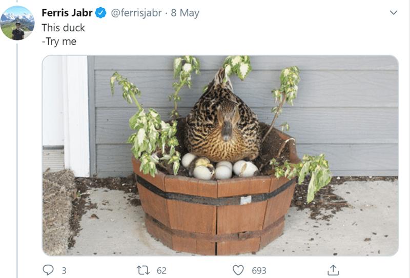 Flowerpot - Ferris Jabr @ferrisjabr · 8 May This duck -Try me 27 62 693