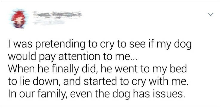 Text - I was pretending to cry to see if my dog would pay attention to me... When he finally did, he went to my bed to lie down, and started to cry with me. In our family, even the dog has issues.
