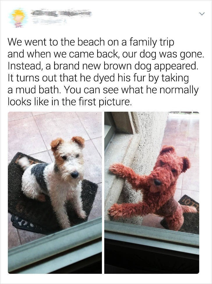 Canidae - We went to the beach on a family trip and when we came back, our dog was gone. Instead, a brand new brown dog appeared. It turns out that he dyed his fur by taking a mud bath. You can see what he normally looks like in the first picture.
