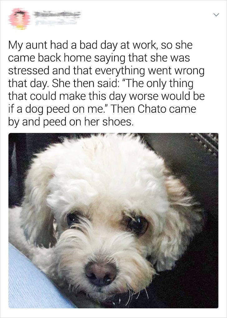 "Dog - My aunt had a bad day at work, so she came back home saying that she was stressed and that everything went wrong that day. She then said: ""The only thing that could make this day worse would be if a dog peed on me."" Then Chato came by and peed on her shoes."