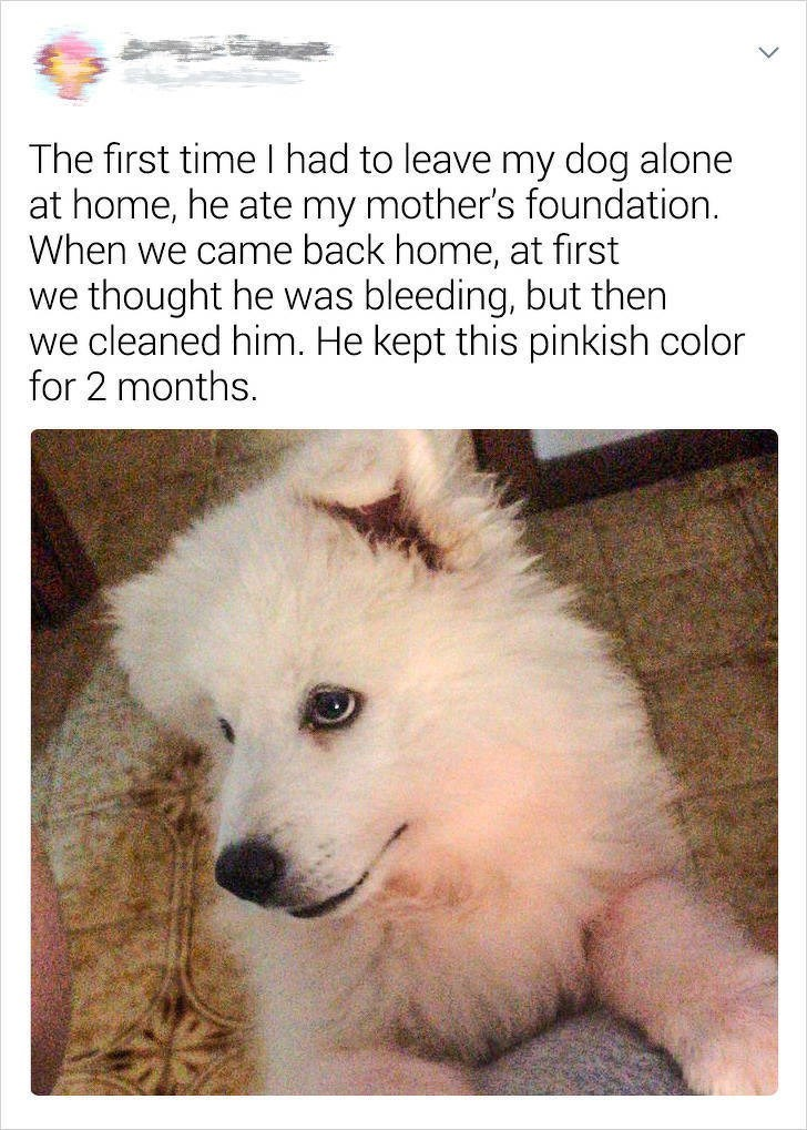 Mammal - The first timeI had to leave my dog alone at home, he ate my mother's foundation. When we came back home, at first we thought he was bleeding, but then we cleaned him. He kept this pinkish color for 2 months.