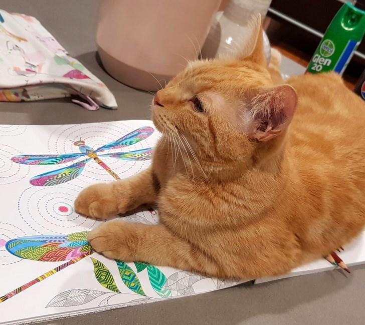 Cat - Cettcl Glen 20 VEINS