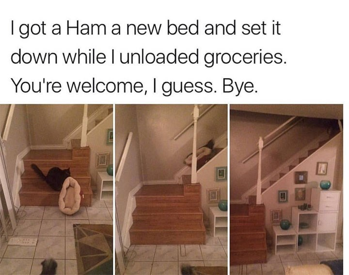 Property - I got a Ham a new bed and set it down while I unloaded groceries. You're welcome, I guess. Bye.