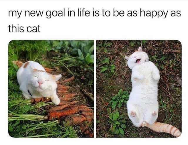 Grass - my new goal in life is to be as happy as this cat