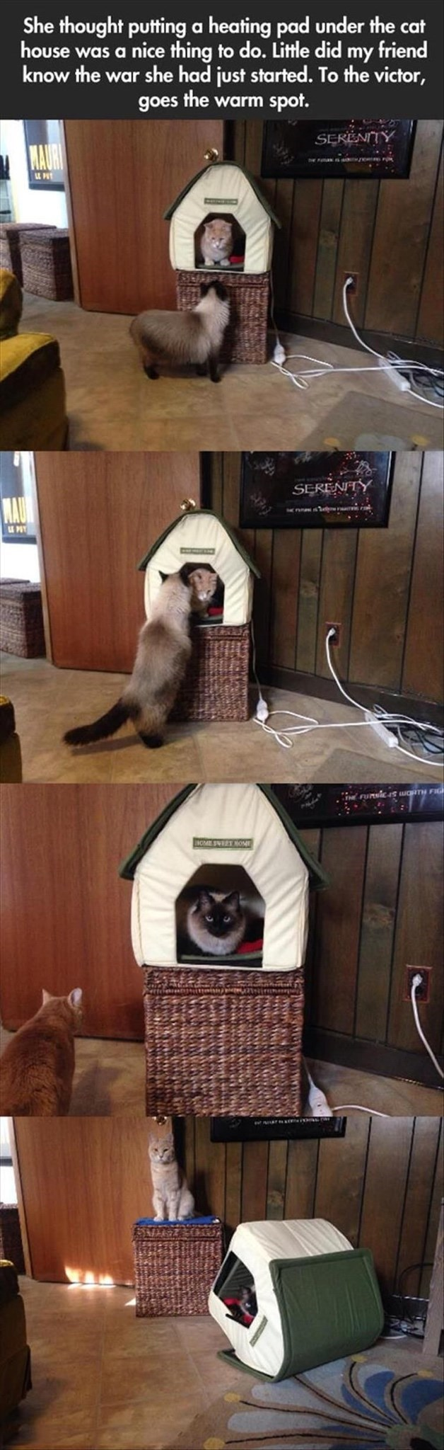 Cat - She thought putting a heating pad under the cat house was a nice thing to do. Little did my friend know the war she had just started. To the victor, goes the warm spot. SERENITY MAUR SERENITY MAU (Funsic WORTH FIG HOME SVEET NOME