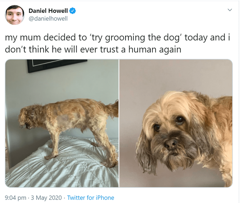 Dog - Daniel Howell @danielhowelI my mum decided to 'try grooming the dog' today and i don't think he will ever trust a human again 9:04 pm · 3 May 2020 · Twitter for iPhone